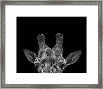 Black And White Photograph Of A Giraffe Framed Print by Preston McCracken