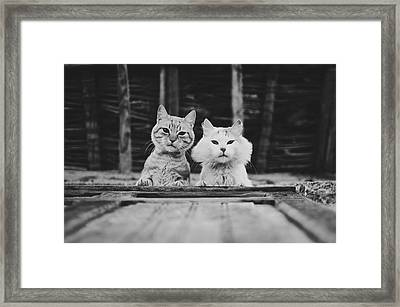 Black And White Portrait Of Two Aadorable And Curious Cats Looking Down Through The Window Framed Print