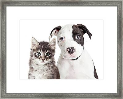 Black And White Puppy And Kitten Framed Print by Susan Schmitz