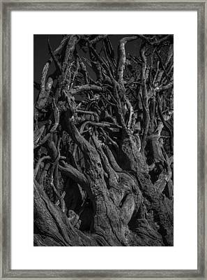 Black And White Roots Framed Print
