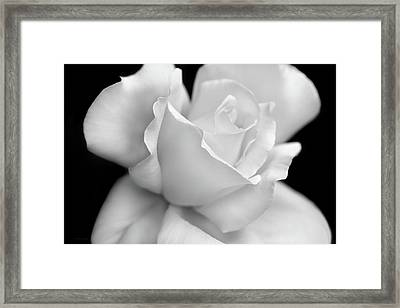 Framed Print featuring the photograph Black And White Rose Flower by Jennie Marie Schell