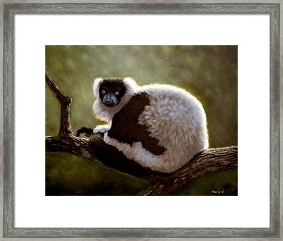 Black And White Ruffed Lemur Framed Print
