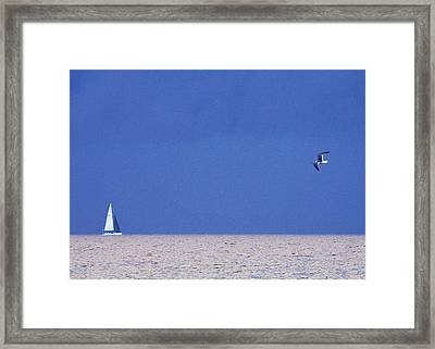 Black And White Sailboat And Seagull Framed Print