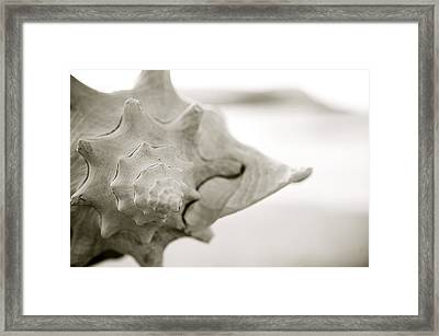 Black And White Seashell Framed Print