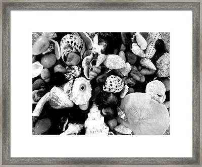 Black And White Seashells Framed Print by Kimberly Perry