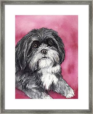 Black And White Shih Tzu Framed Print by Cherilynn Wood