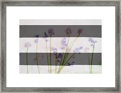 Black And White Stripes And Widlflowers Framed Print