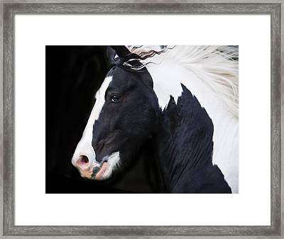 Black And White Study Framed Print