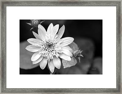Framed Print featuring the photograph Black And White Sunrise Coreopsis by Christina Rollo