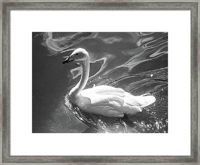 Black And White Swan, Style Oil Painting Framed Print by Nat Air Craft