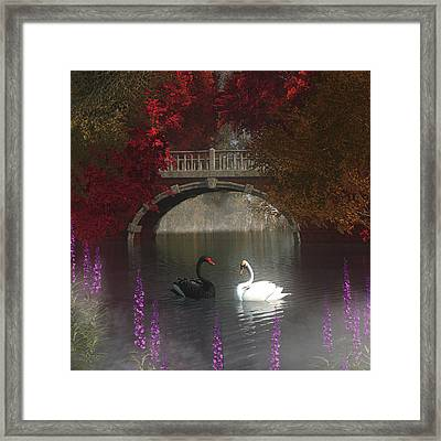 Black And White Swans Framed Print