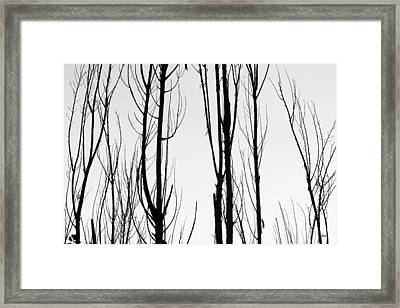 Black And White Tree Branches Abstract Framed Print by James BO  Insogna