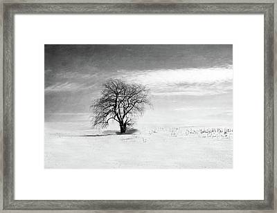 Black And White Tree In Winter Framed Print