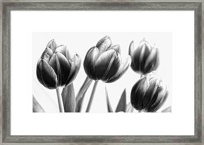 Black And White Tulips Framed Print