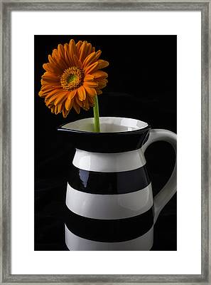 Black And White Vase With Daisy Framed Print