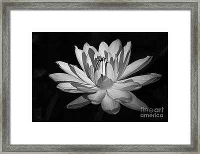Black And White Waterlily Framed Print by Liesl Walsh