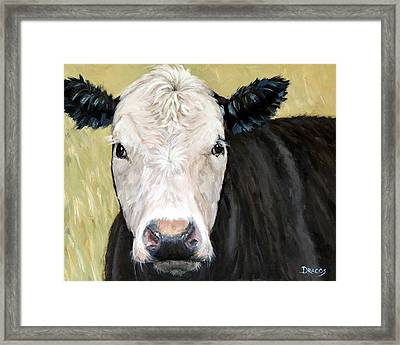 Black Angus Cow Steer White Face Framed Print by Dottie Dracos