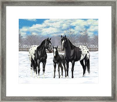 Black Appaloosa Horses In Winter Pasture Framed Print by Crista Forest
