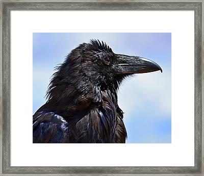 Black As Night - Raven Framed Print