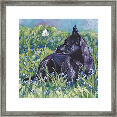 Black Australian Kelpie Framed Print by Lee Ann Shepard