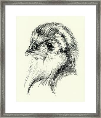 Black Australorp Chick In Charcoal Framed Print