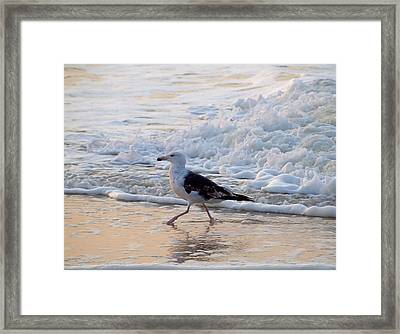 Framed Print featuring the photograph Black-backed Gull by  Newwwman