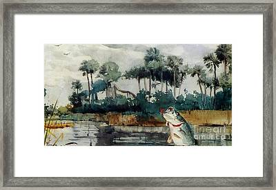 Black Bass Florida Framed Print by Pg Reproductions