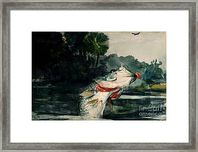 Black Bass Framed Print by Pg Reproductions
