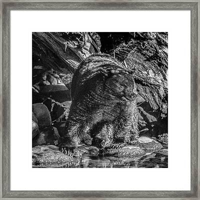 Black Bear Creekside Framed Print