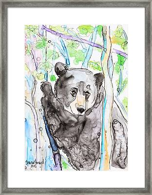 Black Bear On The Bruce Framed Print by Shaina Stinard