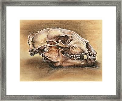 Black Bear Skull Framed Print