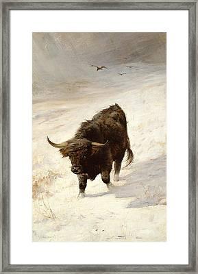Black Beast Wanderer  Framed Print
