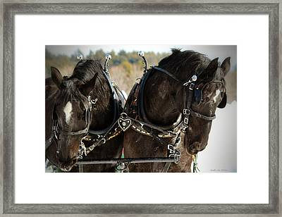 Black Beauties Framed Print by Sandra  Huston