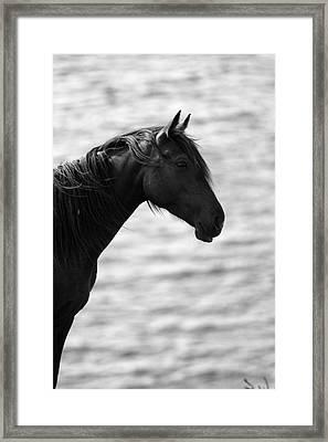 Black Beauty Framed Print by Aidan Moran