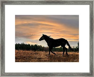 Black Beauty At Sunset Framed Print by Leland D Howard
