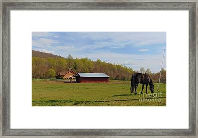 Black Beauty Framed Print