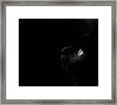 Black Beauty Framed Print by Laura Melis