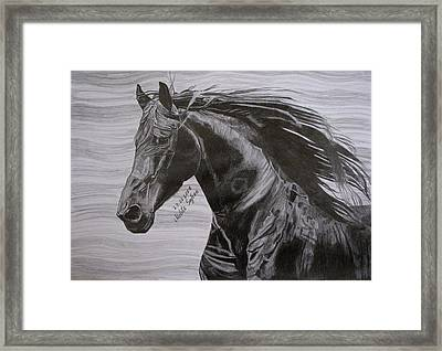 Framed Print featuring the drawing Black Beauty by Melita Safran