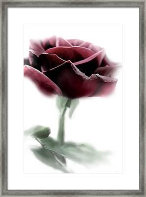 Black Beauty Red Rose Flower Framed Print by Jennie Marie Schell