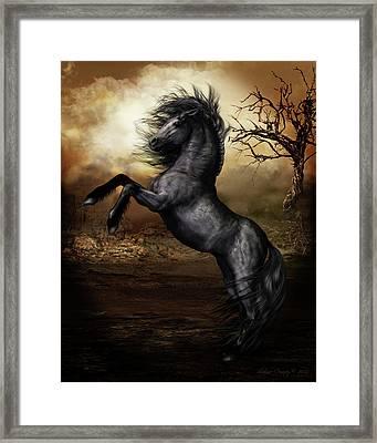 Black Beauty Framed Print by Shanina Conway