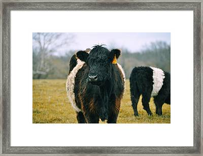 Black Belties Framed Print by JAMART Photography