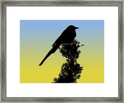 Black-billed Magpie Silhouette At Sunrise Framed Print