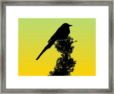 Black-billed Magpie Silhouette - Special Request Background Framed Print