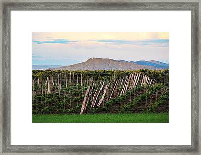 Black Birch Vineyard And Summit House View Framed Print