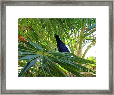 Framed Print featuring the photograph Black Bird And Green Leaf by Francesca Mackenney