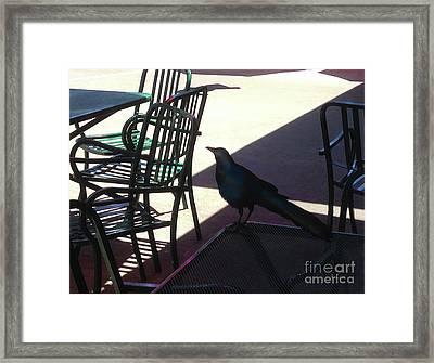 Black Bird At Central Market Framed Print by Felipe Adan Lerma