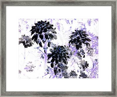 Black Blooms I I Framed Print