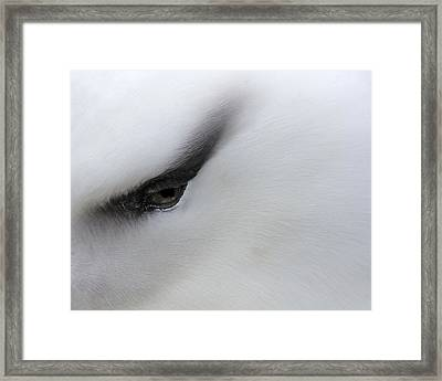 Black Brow 2016 Framed Print