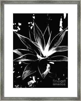 Black Cactus  Framed Print