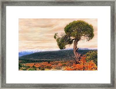 Framed Print featuring the photograph Black Canyon Juniper - Colorado - Autumn by Jason Politte
